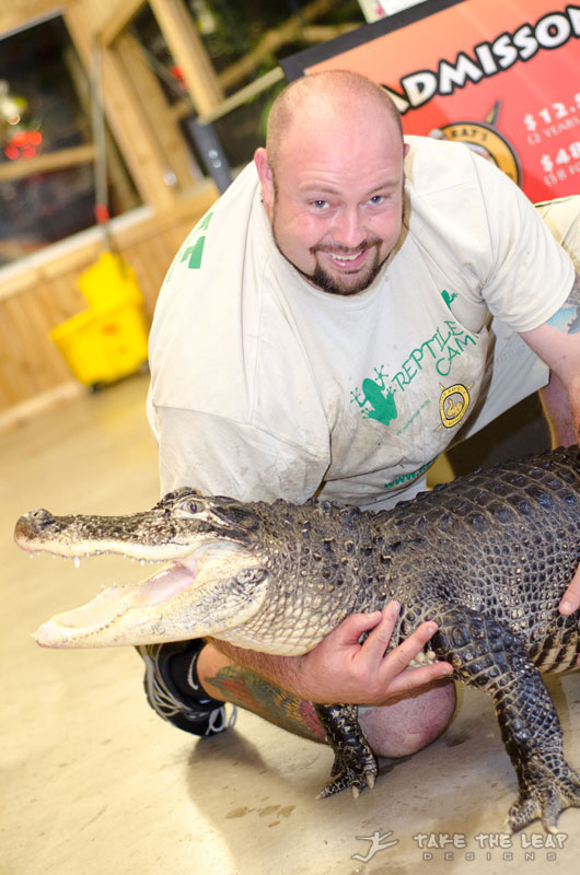 Steve with Mojo, the American Alligator. She was under a foot when he got her; she is now six feet long and crazy strong.